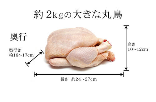 国産 鶏肉 紀州うめどり 丸鶏 中抜き 1羽  約2.0kg〜2.8kg 冷凍 (和歌山県産 銘柄鶏 丸鳥 一羽) ローストチキンに)【紀の国みかんどり(その他ブランド鶏)での代用出荷】