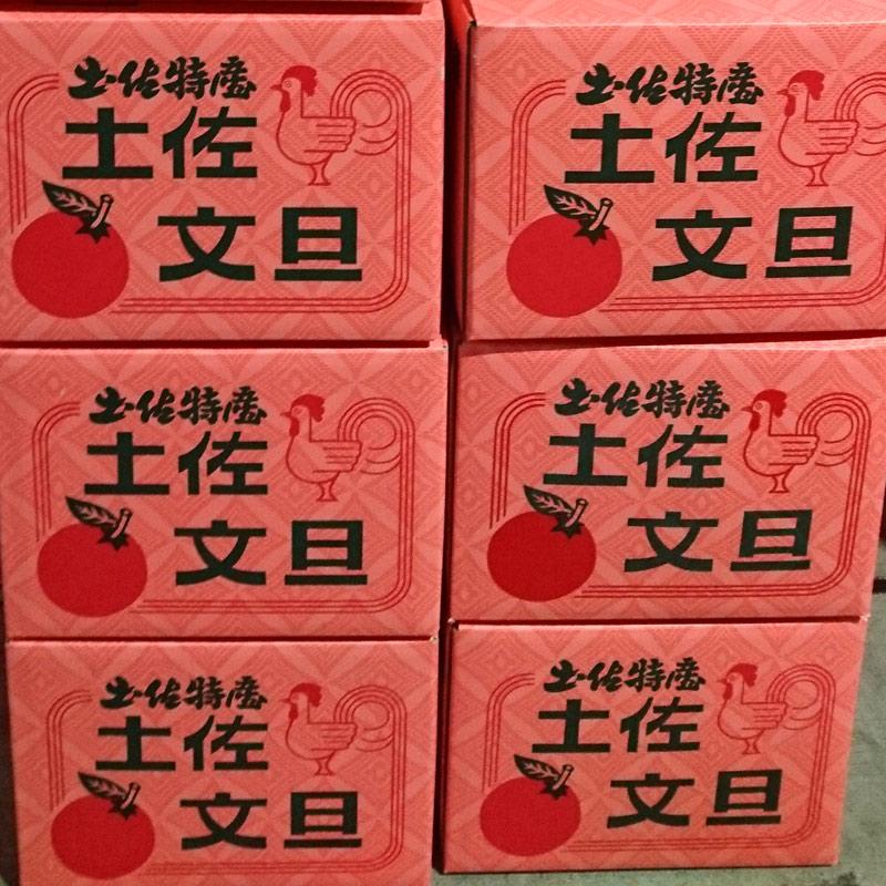 【高知県産】 家庭用 土佐文旦(露地) 10� 送料無料(一部別途送料負担)