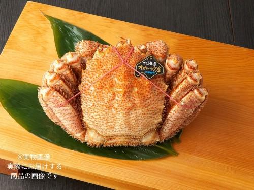 ボイル毛ガニ姿茹 特大サイズ 1kg