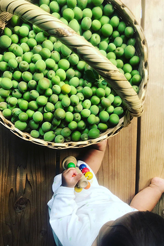 【完売しました!】2021年梅しごと ecomomai 神山町の自然栽培の青梅(在来種) 500g/1㎏
