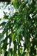 アロマセラピーZoom講座『フトモモ科Eucalyptus属精油Melaleuca属の精油について』3月27日(土)
