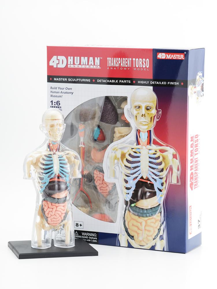 セルフケアのための解剖生理学講座