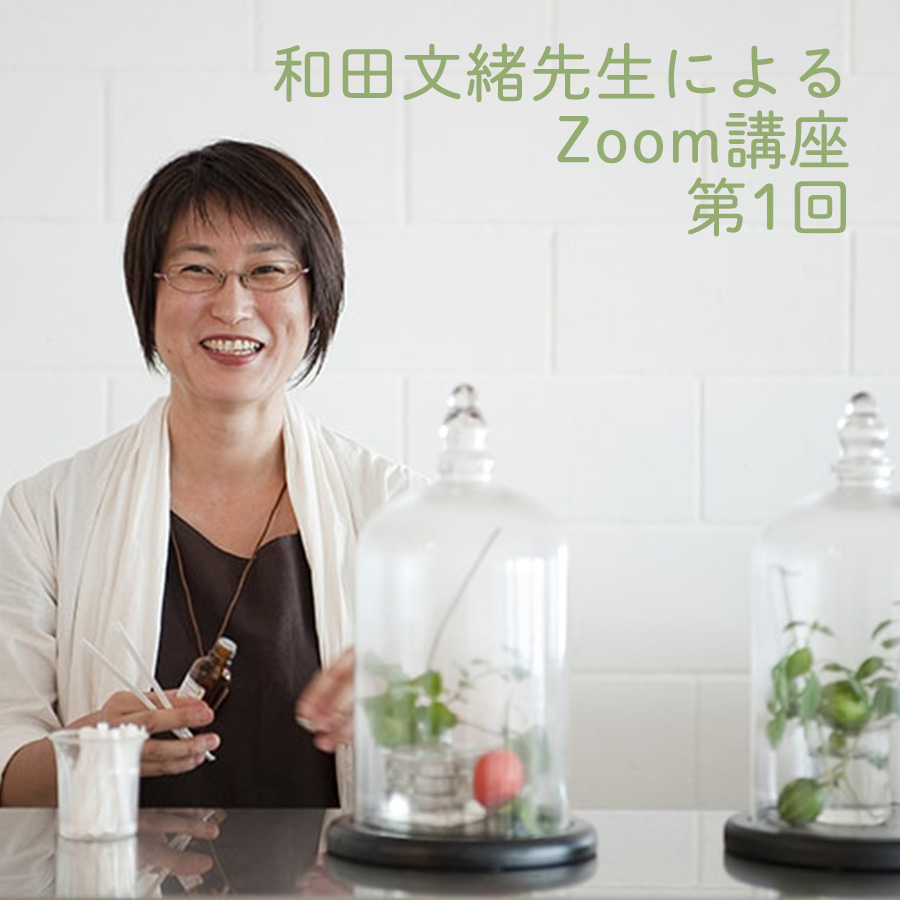 【満席!ICA会員限定】和田文緒先生によるZoom講座 第1回 テーマ『Lavandula属植物の香りの多様性』10月18日(日)