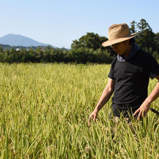プチギフト/糸島・無農薬米とごはんのおとものセット