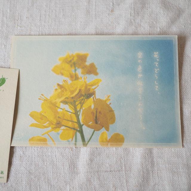 写真と言葉のポストカード/034花と空