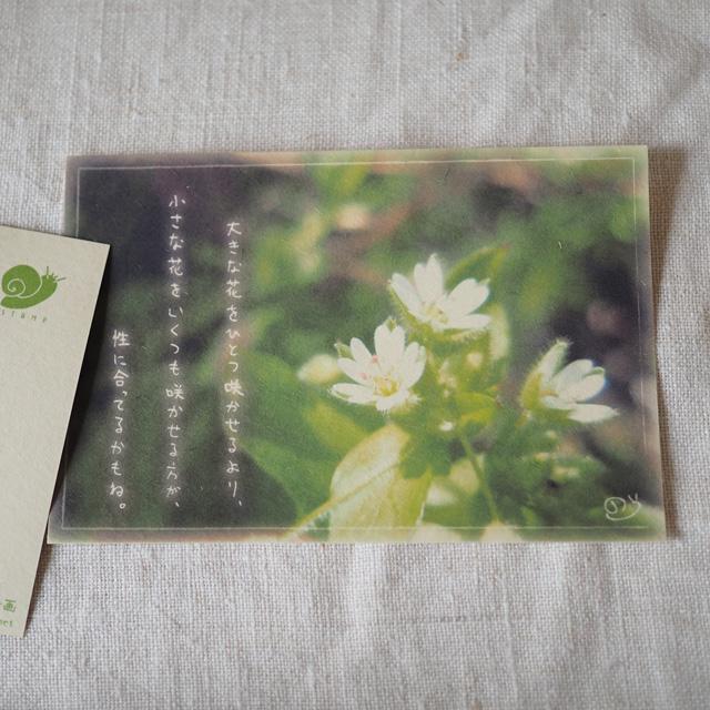 写真と言葉のポストカード/035私のやり方