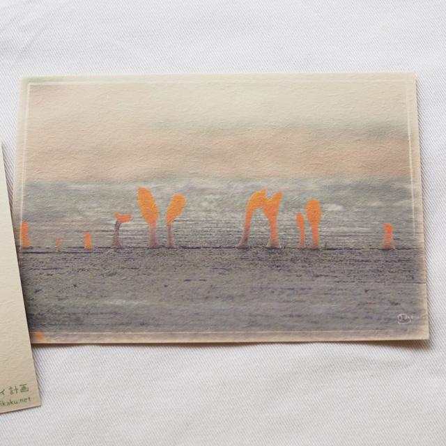 写真と言葉のポストカード/147きのこびと会議