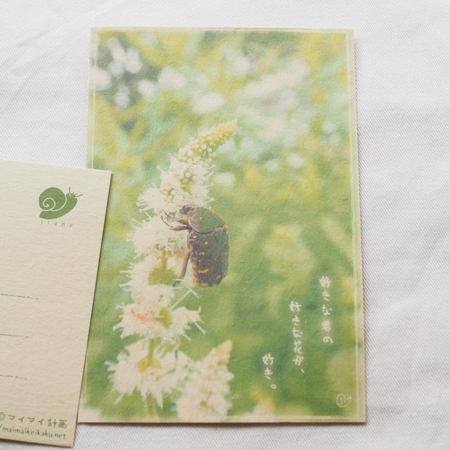 写真と言葉のポストカード/152こあおはなむぐり