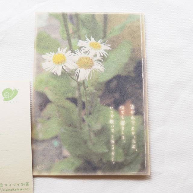 写真と言葉のポストカード/156大丈夫