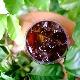 水出しアイスコーヒー/中煎りシングルオリジン(ラベンディション農園 パカマラ種 ナチュラル)
