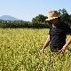 令和元年度産/無農薬白米/5kg 今期終了