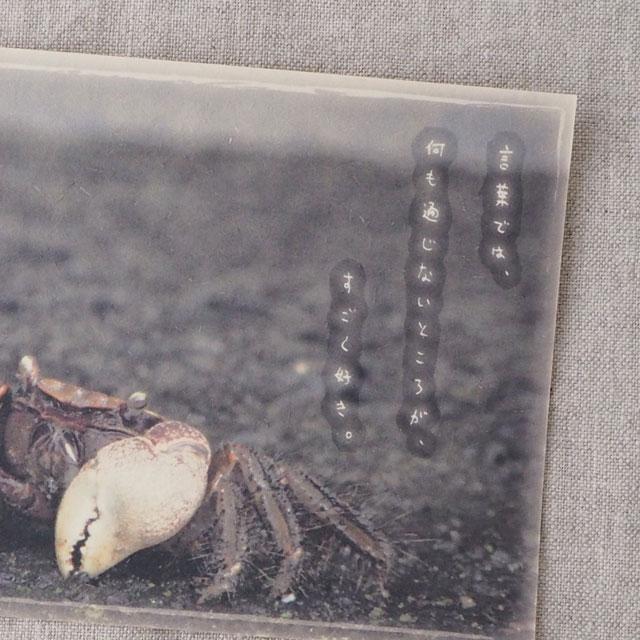 写真と言葉のポストカード/072