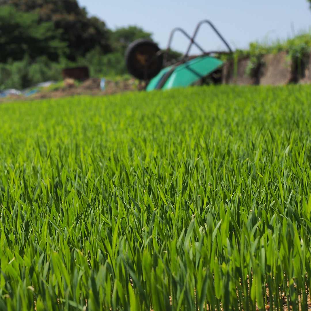 令和2年度産/無農薬玄米/10kg