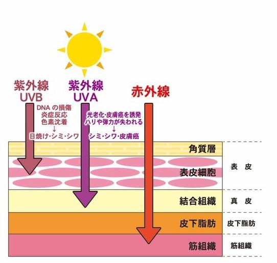 ココクルール UV&IR
