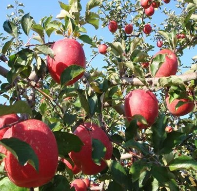 ここさち 丸ごとにんじん&りんごジュース1000ml×6本セット 100%ストレートジュース