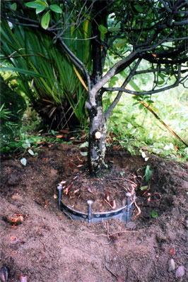 ラクウエツール(4枚セット) 庭木植え替え用具