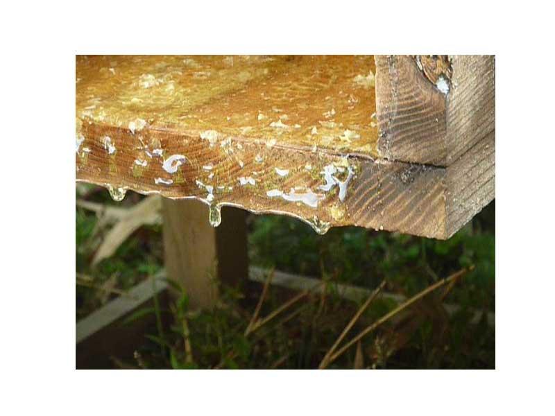 【貴重なハチミツ入り!】対馬和蜂のハニーナッツ