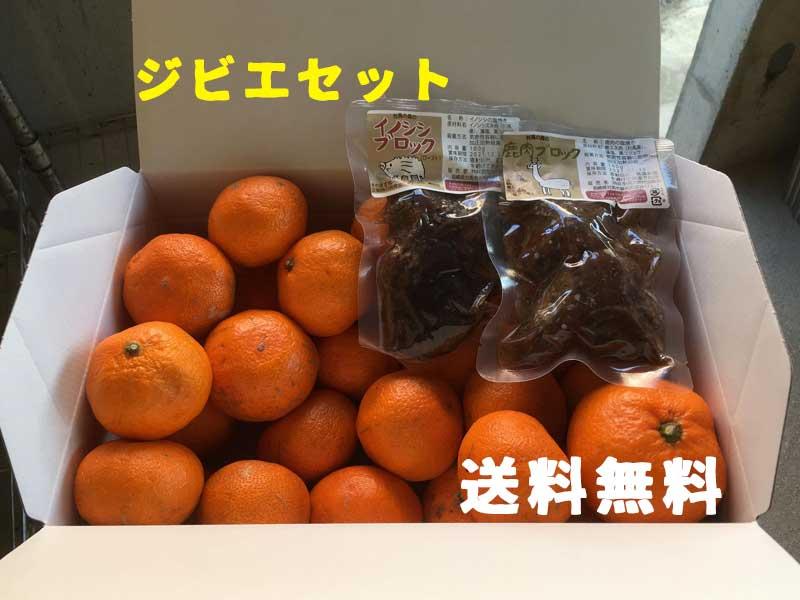 対馬の豆酘(つつ)みかん・わけあり 2.5�〜 【送料無料】