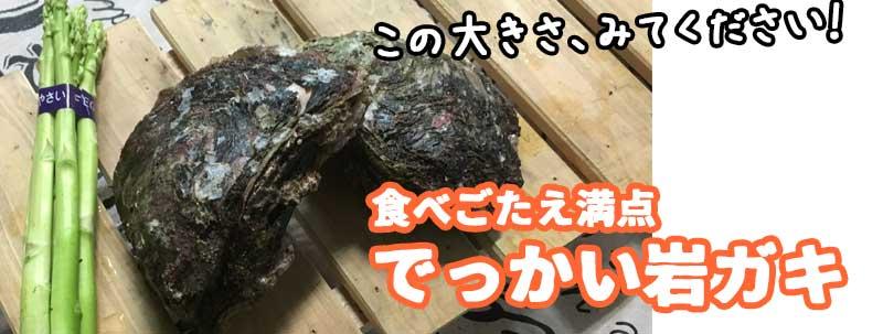 【岩ガキ解禁!】海と山のごちそうセット(夏)!(サザエ・ヒオウギ・イノシシ・鹿他)【BBQに!】