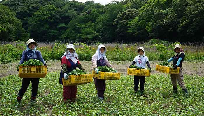 【体感モニター】島のめぐみ対州そば青汁 30包袋入【特別コース】