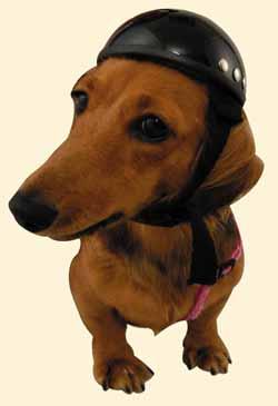 かわいい〜!!愛犬を乗せてツーリング♪小型犬・猫用 アニマルヘルメット/DAMMTRAX(ダムトラックス)