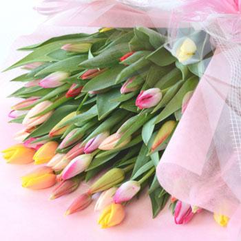 「ミックスブーケ 贈答用 50本入 8025」 富山県産チューリップの花束を産地直送