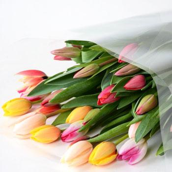 「ミックスブーケ ご自宅用 30本入 8034」 富山県産チューリップの花束を産地直送