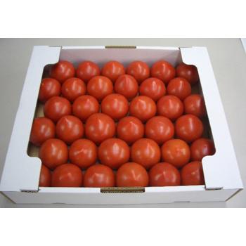 真栄青果:福井県産 越のルビートマト 2kg