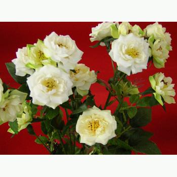 造花:ローズスプレー