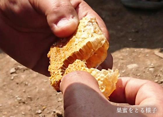 ネパールヒマラヤ山麓はちみつ 300g 【蜂蜜 ハチミツ】