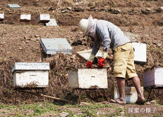 ネパールヒマラヤ山麓はちみつ 300g×3個セット 【蜂蜜 ハチミツ】