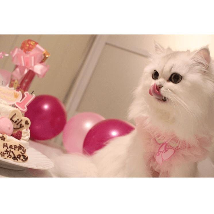 猫用・Lovely・マカロンCastle4号(ナンバーキャンドル付)★冷凍便