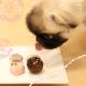 犬用プレミアム★松阪牛入りトリュフ(冷凍便)