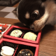 犬用・バレンタイントリュフ(冷凍便)
