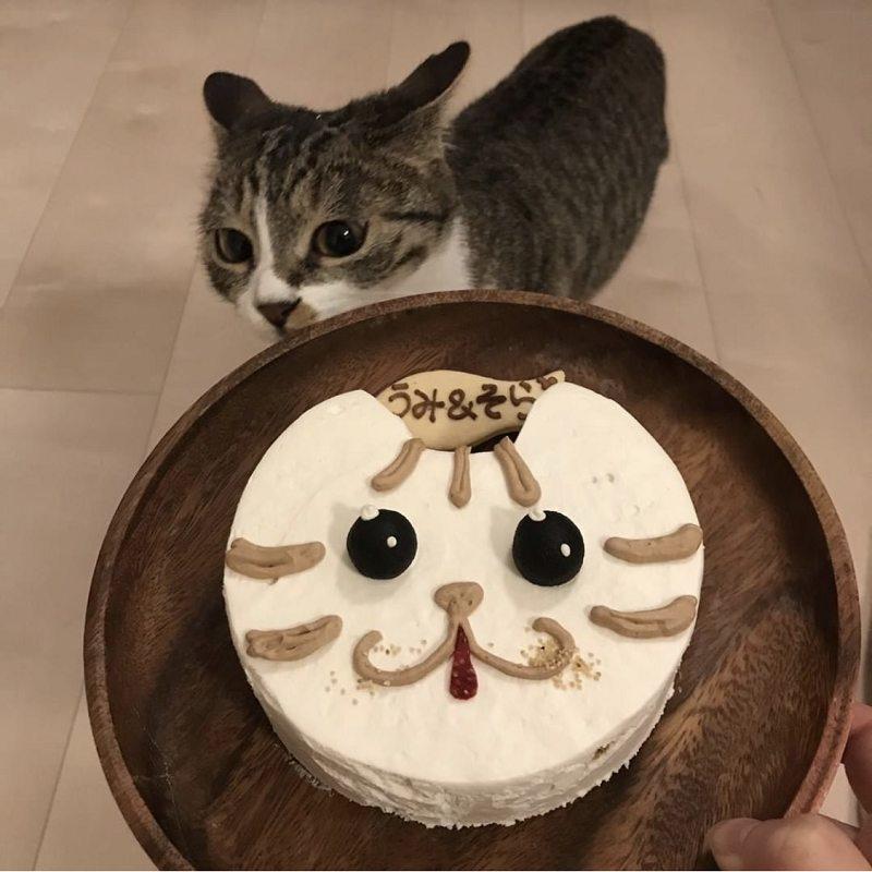 Kitty Cat(コジロー)★冷凍便