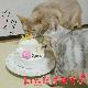 キティーズCastle4号★冷凍便