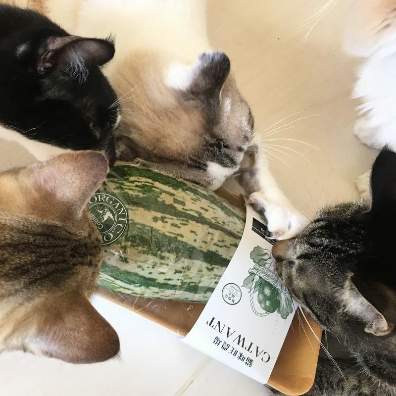 無農薬・オーガニック★ Catトイ(鯉)