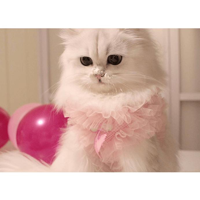猫用・Dressyキャッスル★冷凍便
