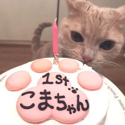 猫用・肉球3Dマカロンデコ 4号★冷凍便