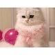 Fancy Cat デコレーション・4号★冷凍便