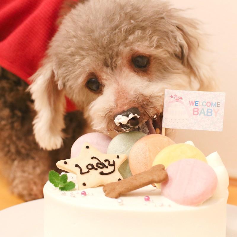 パーティー☆も na カロン!5号★冷凍便