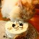 Kitty Cat(ルナ)★冷凍便