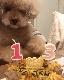 ベイクド・スイートポテト 5号★冷凍便
