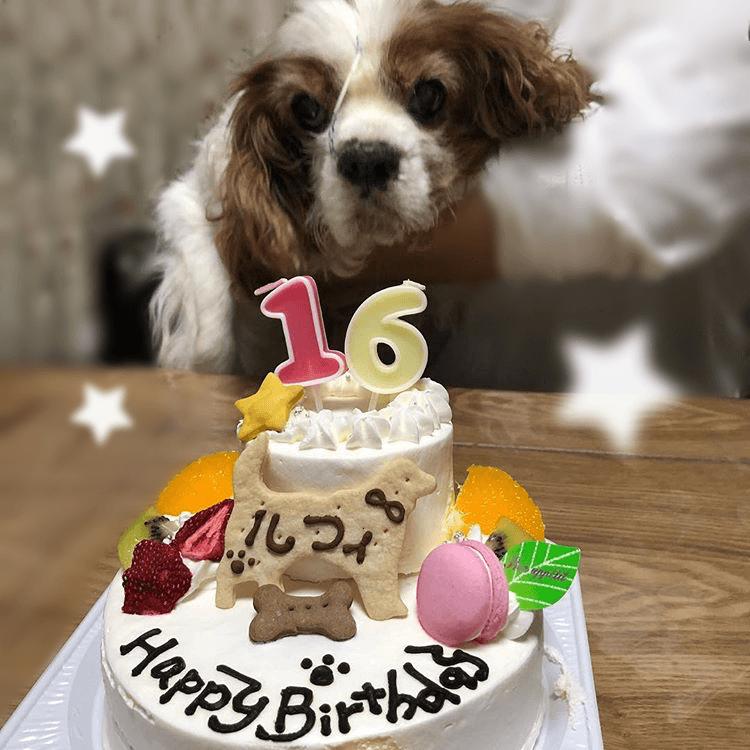 Dear My Dog 5号(キャンドル付)★冷凍便