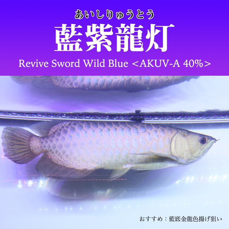 コピーアロワナ水中照明 藍紫龍灯 ワイルドブルー UV 40% EX LED2列 金龍 150cm水槽用 AK-150UV-EX