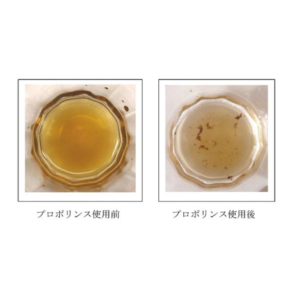 マウスウォッシュ 「プロポリンス」 / ボトルタイプ レギュラータイプ(600ml)