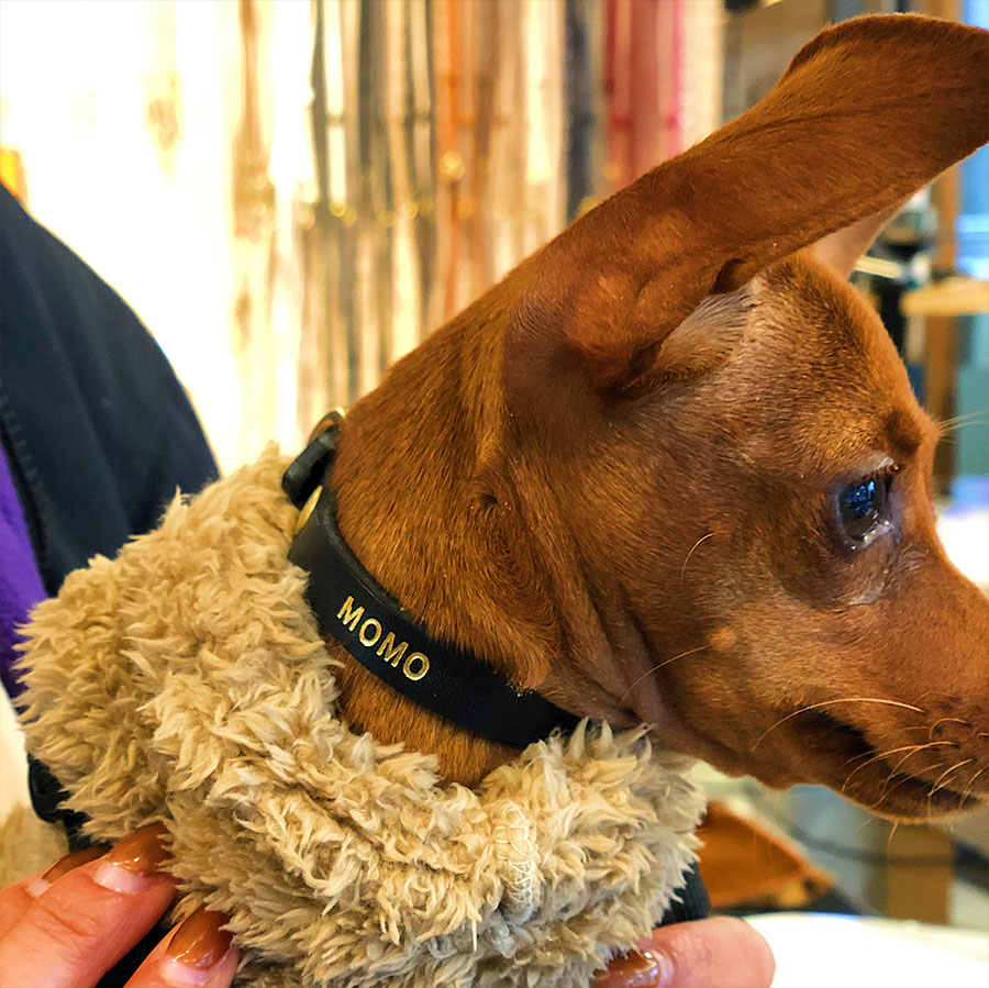 Dog Collar:首輪