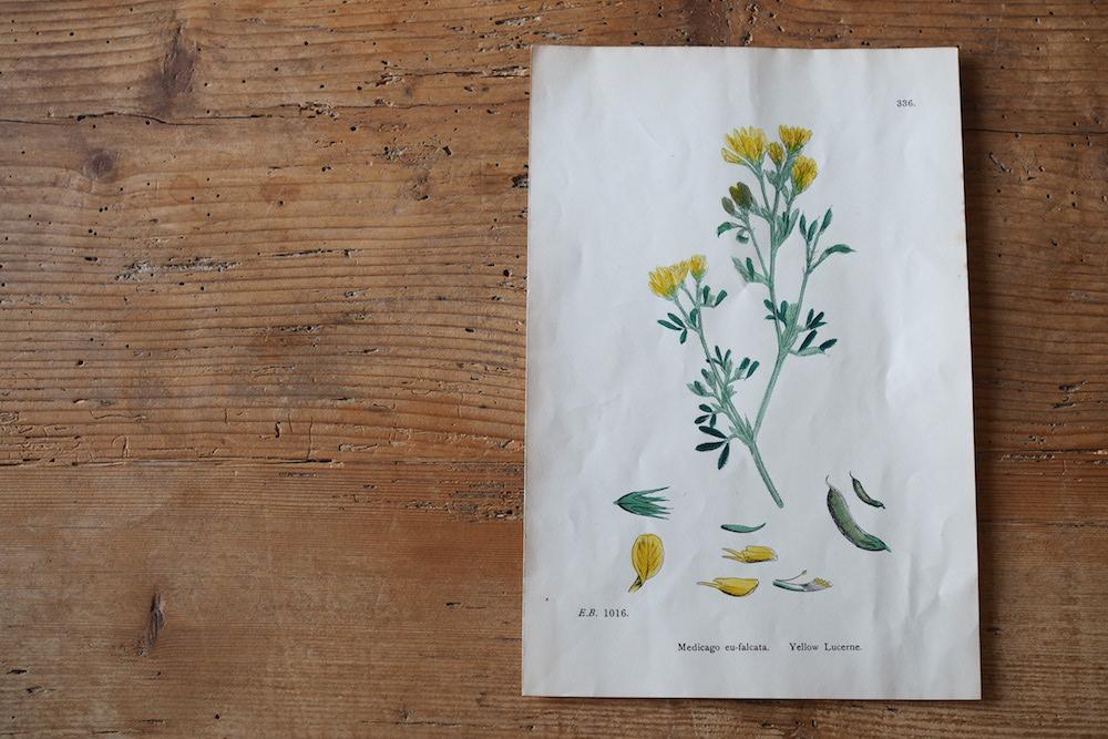 Botanical art A <p> ボタニカルアート A</p>