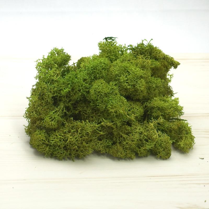 アイスランドモス 小袋 Preserving61071-780【大地農園】