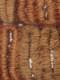 ディダ族 絞染め布(ディダクロス)